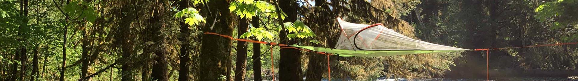 climb trees about climb trees